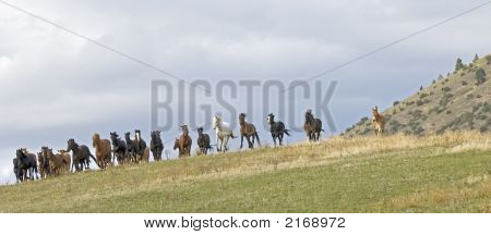 Horses- Stampede Coming Over The Ridge