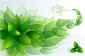 stock photo of green leaves  - Fresh green leaves vector border - JPG