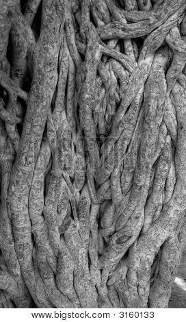 Confused Tree