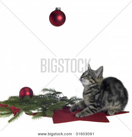 Cat And Christmas Decoration