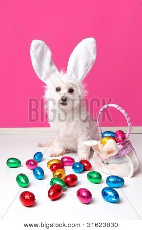 Pretty Dog With Bunny Ears And Easter Eggs
