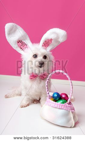 Little Dog With A Bag Of Chocolate Easter Eggs