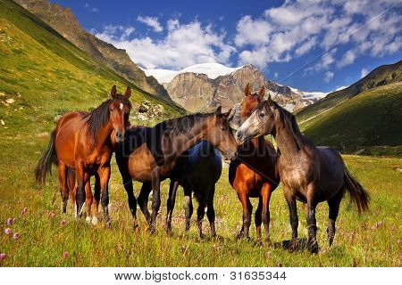Picturesque mountain landscape with horses