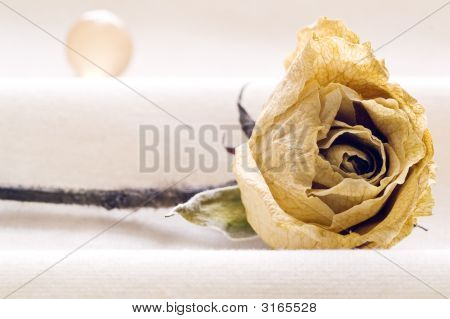 Dehydrated Rose And Sphere