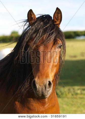 Connemara Headshot