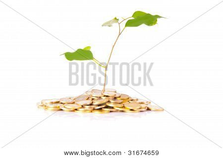 Coins And Plant