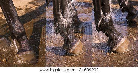 Washing Horses' Hooves