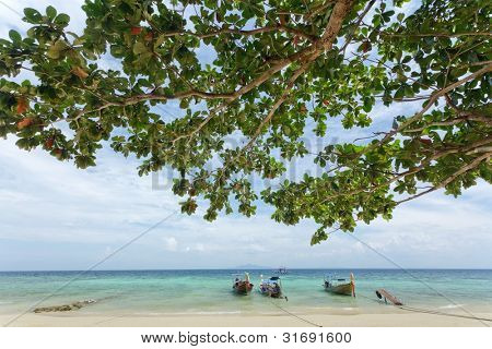 tropical beach with almond tree and long tail boats, ko phi phi, Thailand