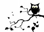 stock photo of owl eyes  - Vector illustration of a black cartoon owl silhouette - JPG
