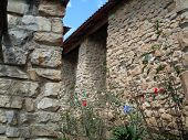 Natural Flowers That Grow Spontaneously At The Gates Of The Main Church Of Leymebamba poster