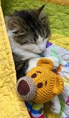 Tabby Cat Sleeping With Crochet Teddy Bear Under Quilt Cover poster