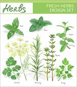 picture of aromatic  - Fresh herbs - JPG