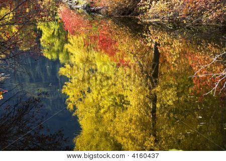 Fall Colors Close Up Wenatchee River Stevens Pass Leavenworth Wa