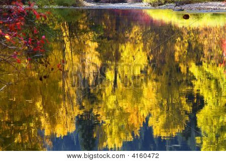 Fall Colors Wenatchee River Relections Forest Stevens Pass Leave