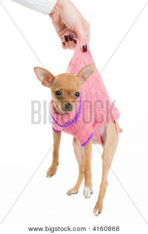 Female Hand Holding Funny Dog