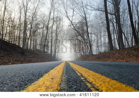 Forest road in fog