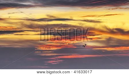 An image of two birds in the sunset sky