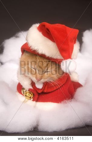 Sleepy Kitten In A Santa Costume