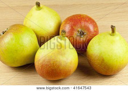 Paradise pears