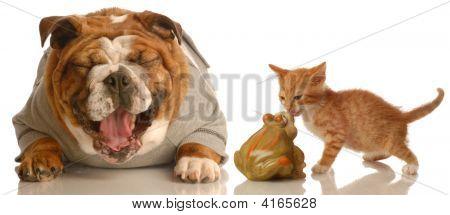 Bulldog Laughing Kitten Kissing Toad
