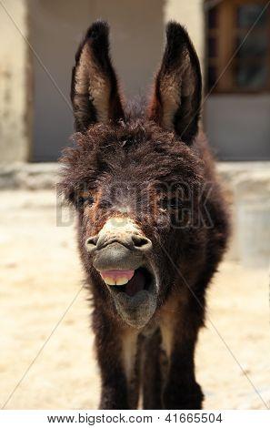 Yawn donkey