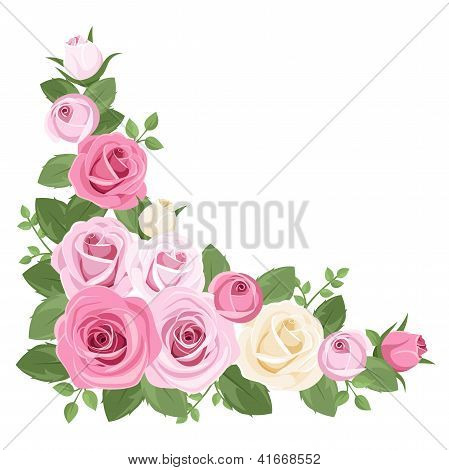 Pink and white roses, rosebuds and leaves. Vector illustration.