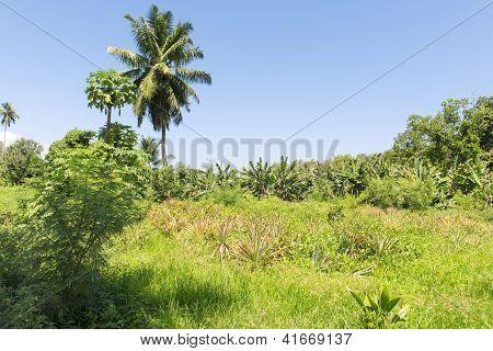 Vanilla Plantation On The Bright Sunny Day On Seychelles Island, La Digue