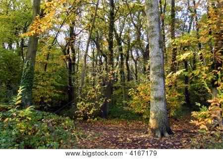 Amberley Wood