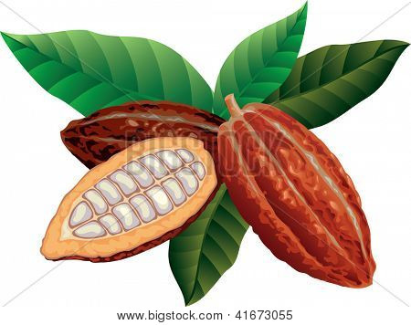 Cocoa beans with green leaves. Raster image. Find editable version in my portfolio.