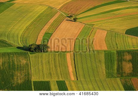 Green fields aerial view before harvest at summer