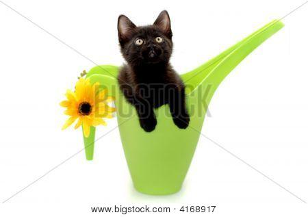 Kitty Gardener
