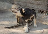 foto of stray dog  - Scratching Dog in cage at the animal shelter - JPG