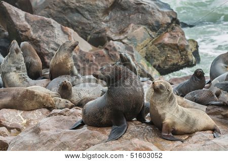 Sea Lions over the rocks