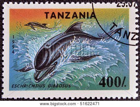 A stamp printed in Tanzania showing California Gray Whale eschrichtius gibbosus