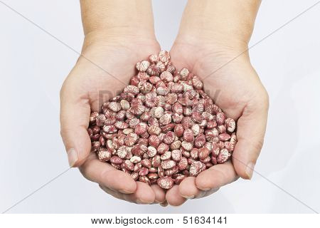 Gorgon Fruit In Man's Hand