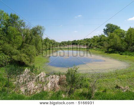 Minnesota Pond