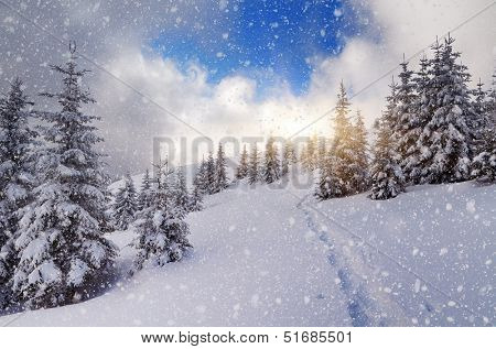 Winter landscape with a footpath on the snow in the mountain forest. Blizzard and the sun
