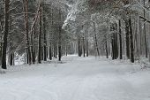 picture of paysage  - winter paysage - JPG