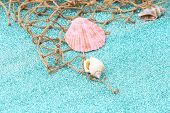 stock photo of shell-fishes  - Sea shells and fish net - JPG