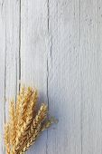 pic of woodgrain  - Bunch of ripe harvested golden wheat on a white wood background with woodgrain texture and cracks and copyspace for your text - JPG