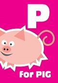 picture of baby pig  - P for the Pig an animal alphabet for the kids - JPG