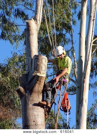 Timber Worker 1