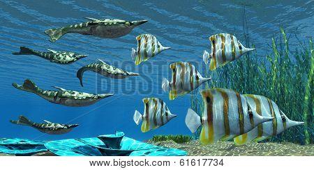 Devonian Pteraspis Fish
