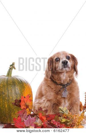 Dog Fall Portrait