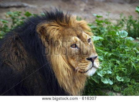 King Of Predators