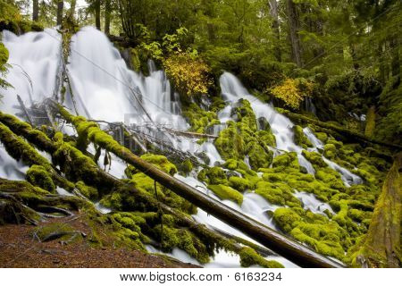 Clearwater Falls - Umpqua Scenic Byway
