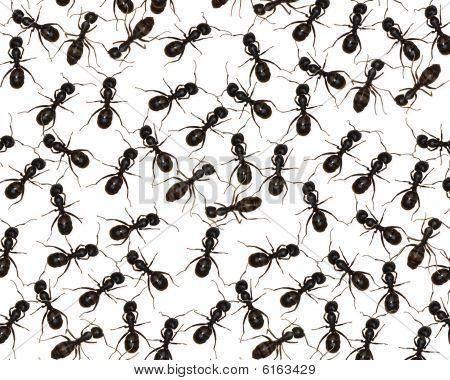 Crawlen mit Ameisen