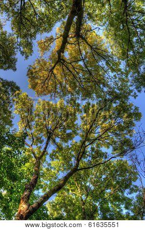 Trees Branches With Leaves, Mainz, Rheinland-pfalz, Germany