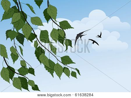 Birch on sky background