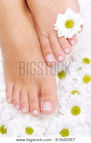 Flowers  around Well-groomed woman feet with the beauty pedicure